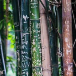 De voordelen van bamboe