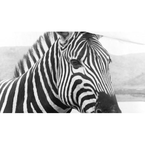 Byrklund dekbedovertrek Beastly (zwart-wit)