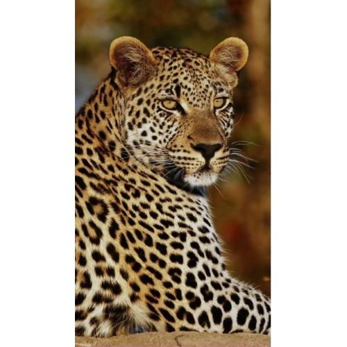Good Morning strandlaken Leopard (5704, 100x180cm)